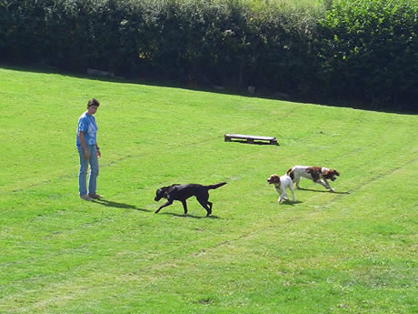Leburnick Kennels - Dogs exercising on our extensive fields.